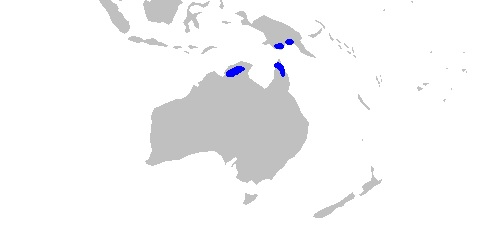 Distribución tiburón lanza