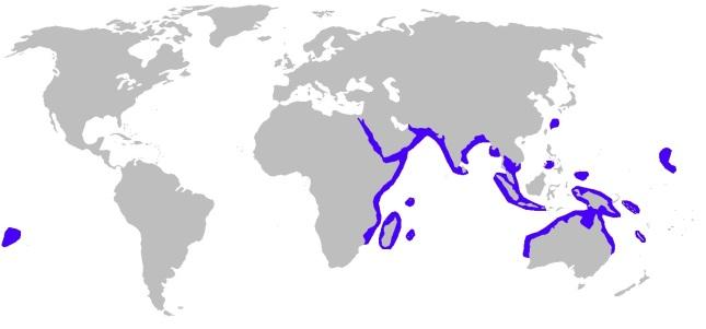 Distribución Tiburón segador