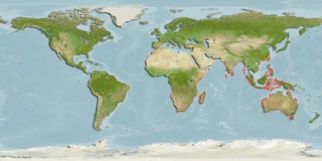 Distribución tiburón sierra