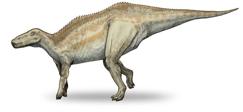 Grandes Dinosaurios Herbívoros II (3/6)