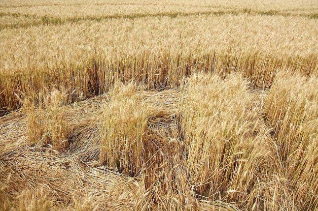 crop-circle-detalle