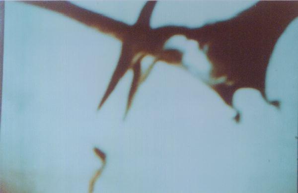 Billy Meier Pteranodon