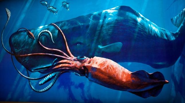 Calamar Gigante1