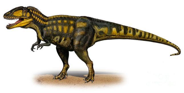 carcharodontosaurus1.jpg?w=645