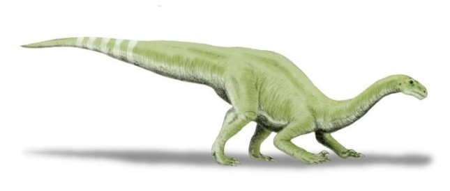 Coloradisaurus