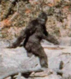 Fotograma 352 de la filmación Patterson-Gimlin Bigfoot