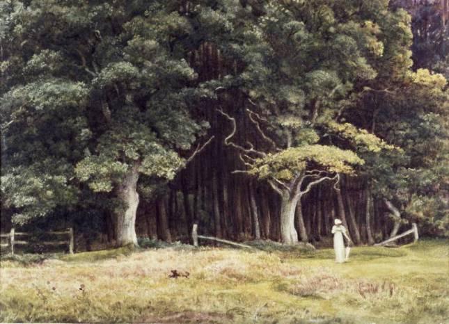 Paisaje boscoso