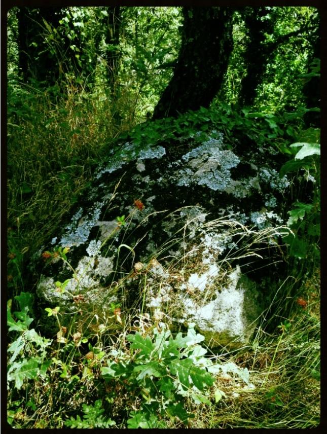 Piedra bosque