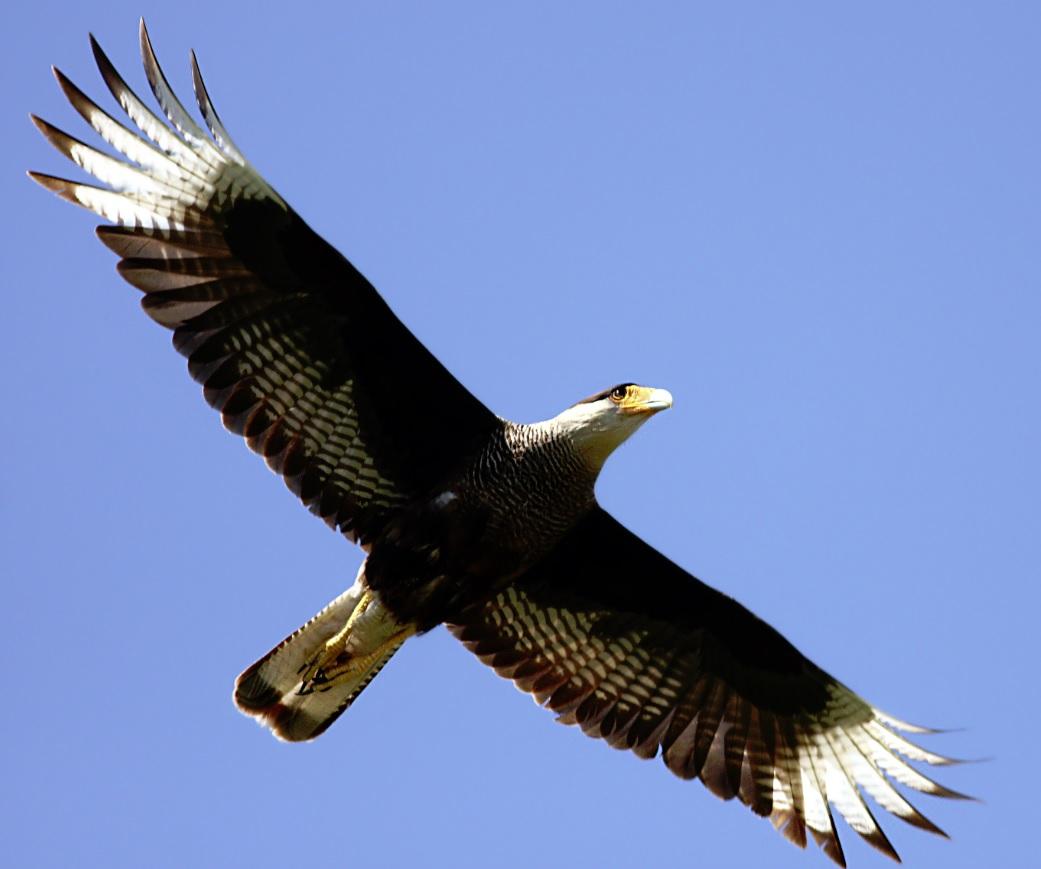 Aves | La Exuberancia de Hades