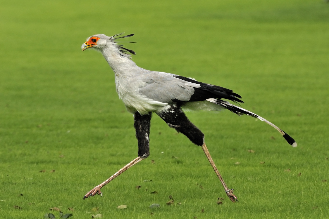 Aves de Presa II | La Exuberancia de Hades