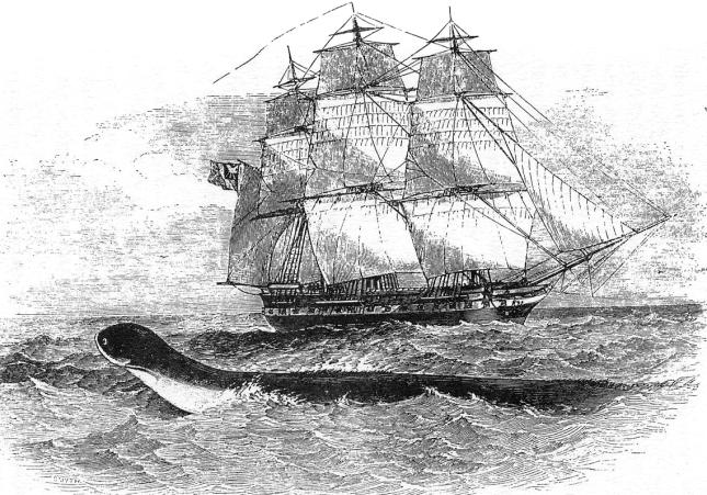 Serpiente marina Daedalus1