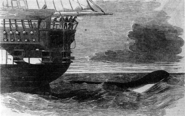 Serpiente marina Daedalus2