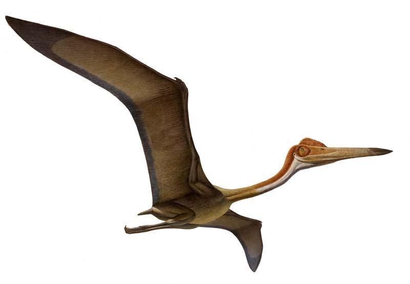 Nombre y foto de los dinosaurios 78