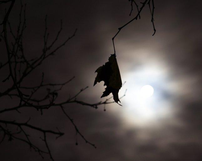 Luna Llena hojas
