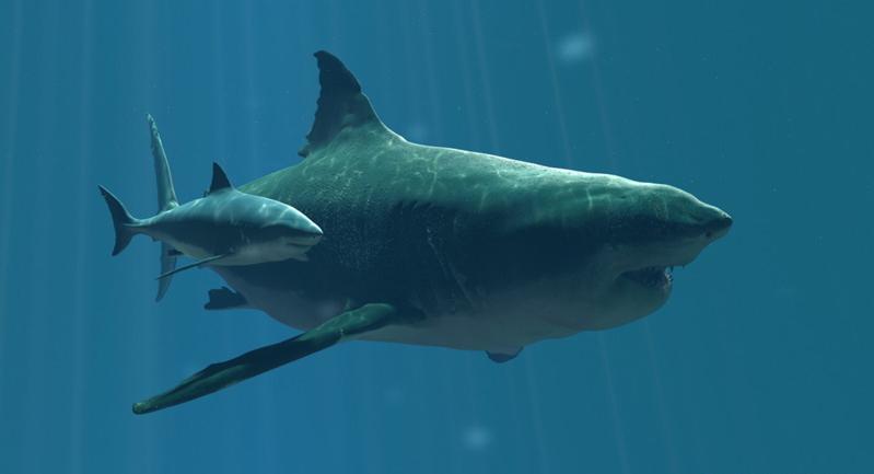 foto tiburon megalodon: