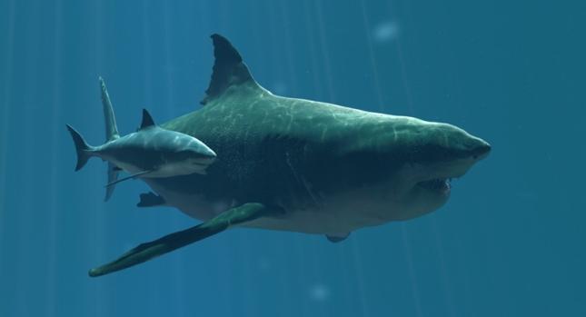 Carcharodon megalodon vs Tiburón blanco