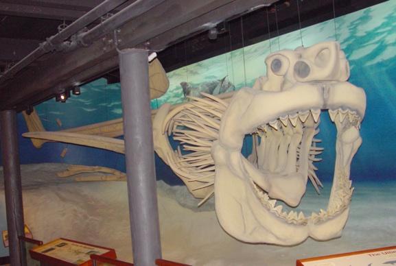 Esqueleto Carcharodon megalodon