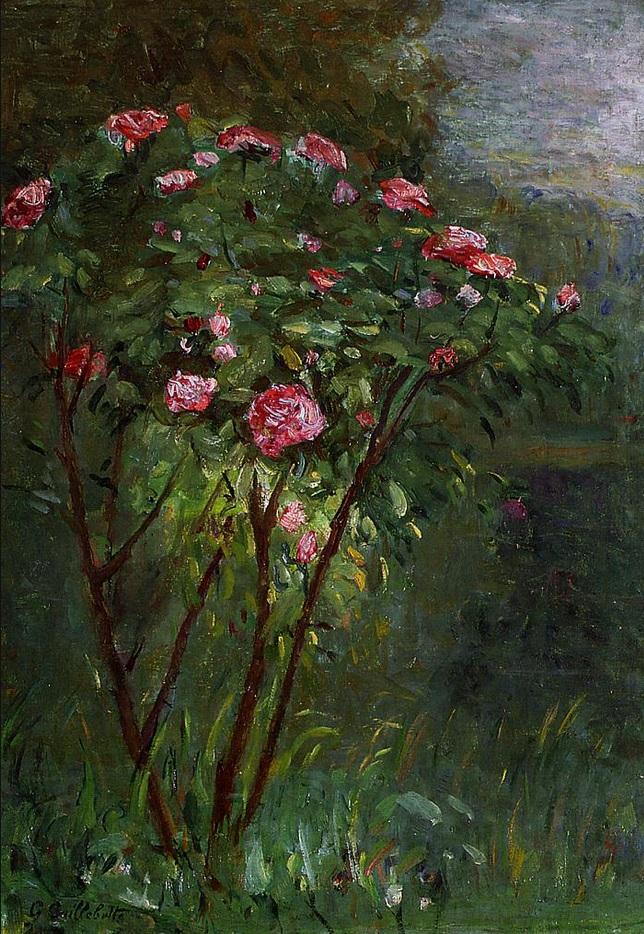 Rosal en flor