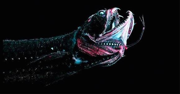Pez dragón1
