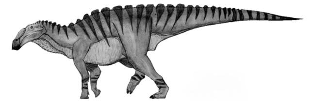 Huaxiaosaurus