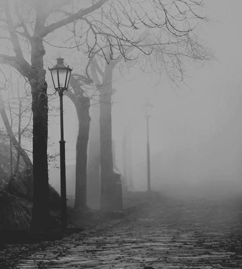 Calle niebla