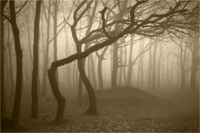 Bosque de Hoia-Baciu