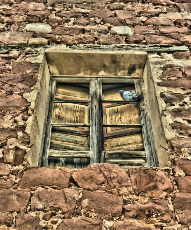 Paloma ventana