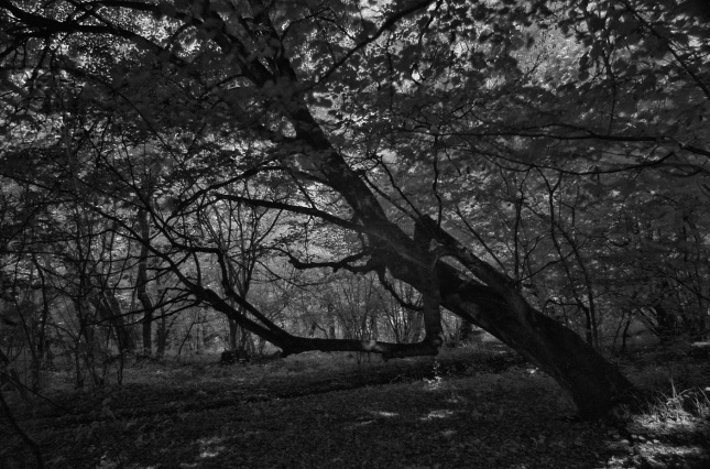 Bosque de Hoia-Baciu | La Exuberancia de Hades