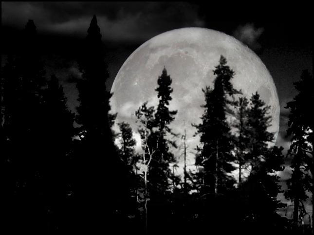 Luna árboles