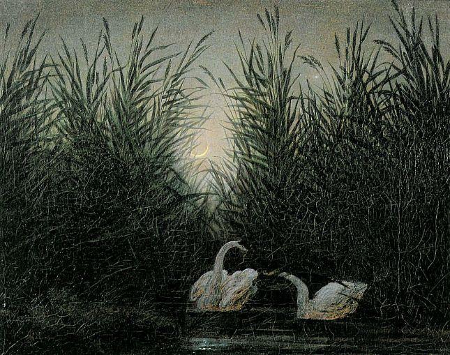 Cisnes en el cañaveral