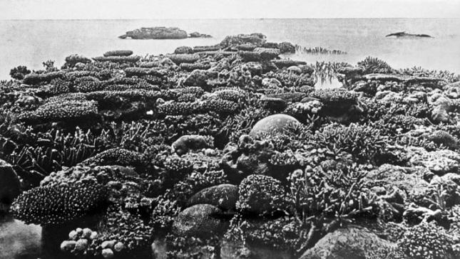 Gran Barrera de Coral