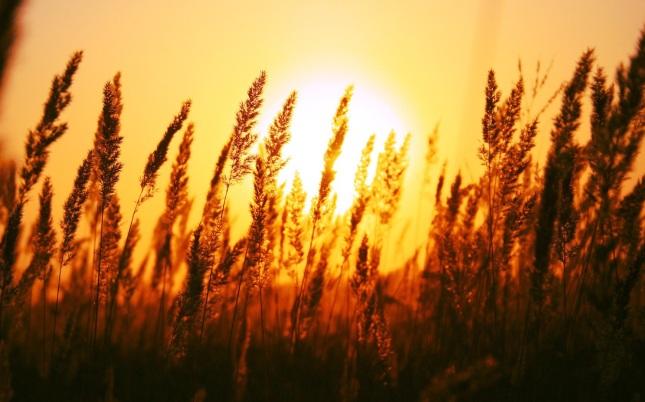 Atardecer trigo