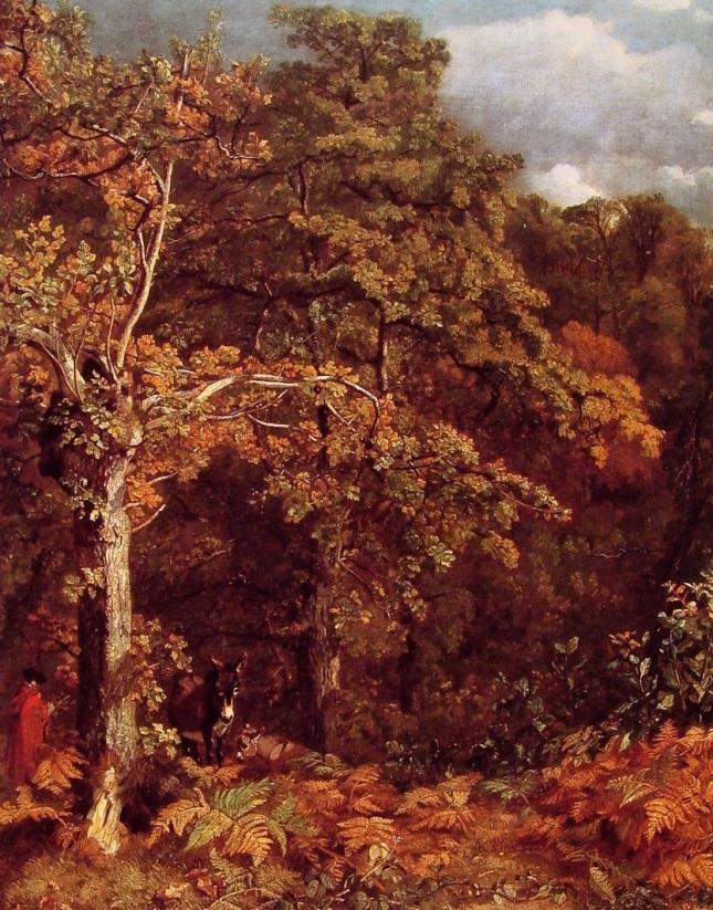 paisaje-de-un-bosque