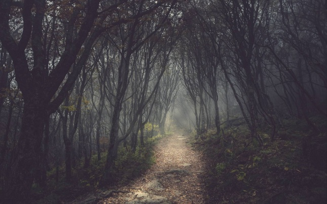 camino-bosque