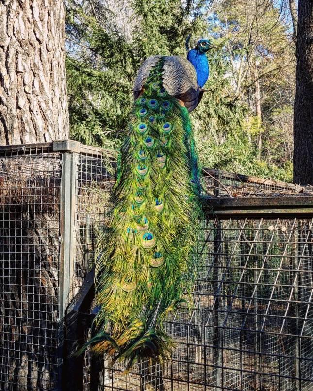 Aves   La Exuberancia de Hades